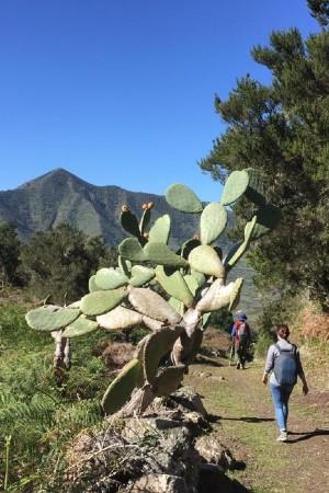 Hiking Palm Valley - Tenerife